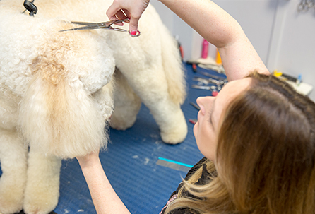 Full and Mini Grooms Professional Dog Grooming by Pampered Paws Glasgow