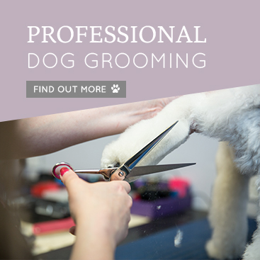 PROFESSIONAL-DOG-GROOMING