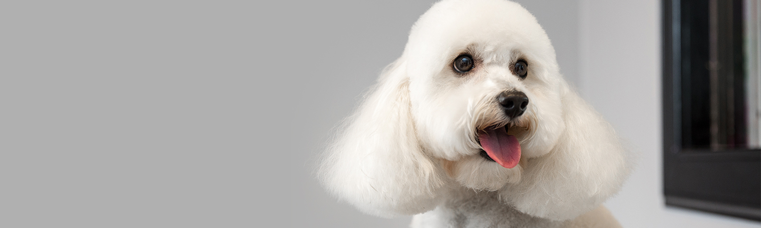 Pampered Paws Glasgow providing professional dog grooming salon, situated in the West of Glasgow.