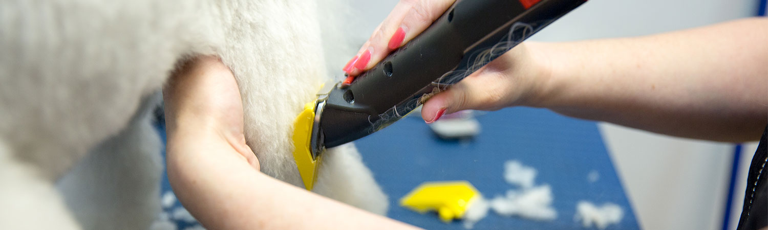 Professional Dog Grooming by Pampered Paws Glasgow